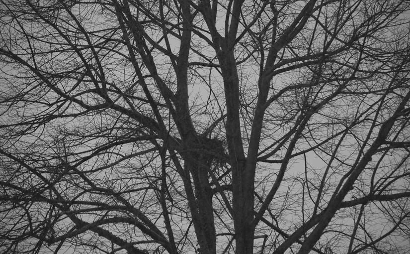 Baum als Symbol für einen düsteren Tag, den man auch im Einkaufszentrum verbringen kann