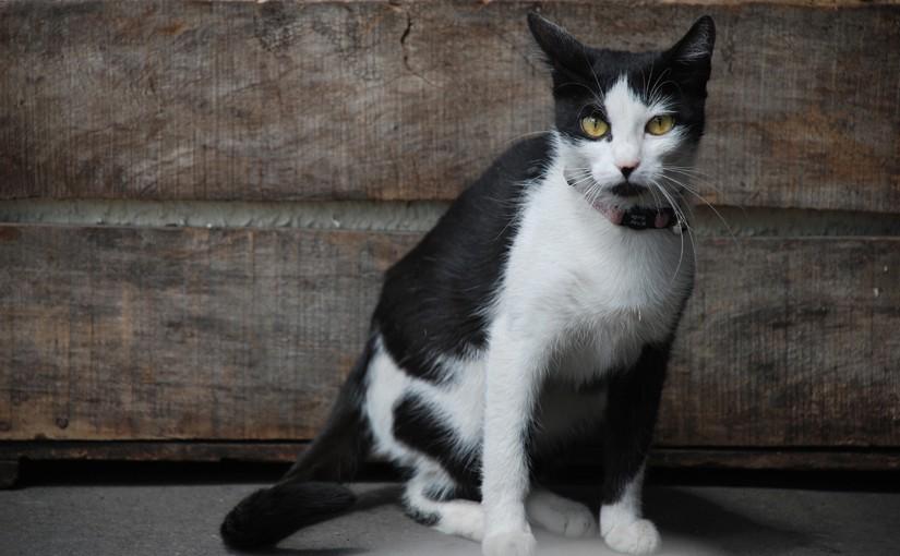 Marketingratschläge - Katze als Symbol für Katzenvideos